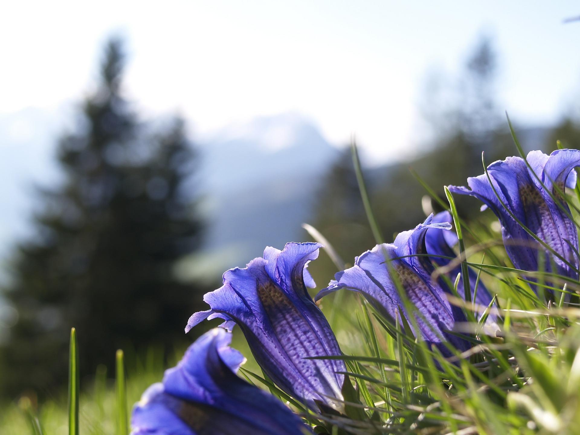 Österreich: Wanderung Enzianhütte
